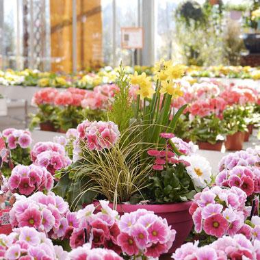Coronavirus. Autorizzata vendita piante e fiori