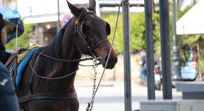 Piazza Verdi - Limitazione alla circolazione nelle aree di sosta per veicoli a trazione animale