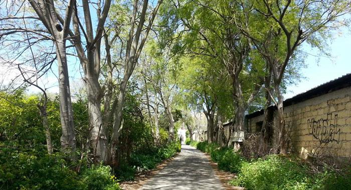 Parco Villa Turrisi. Comune si costituisce in giudizio nell'appello della Sovrintendenza per la salvaguardia dell'area verde