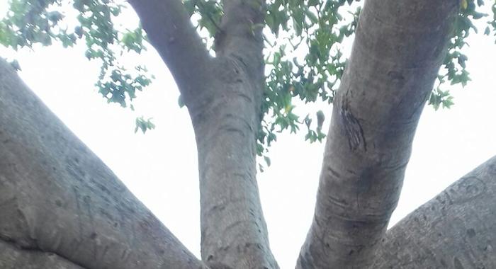 Verde pubblico. Programmato abbattimento alberi a rischio di schianto