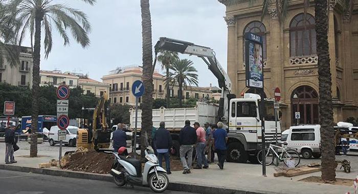 Verde. Completata piantumazione palme in piazza Verdi