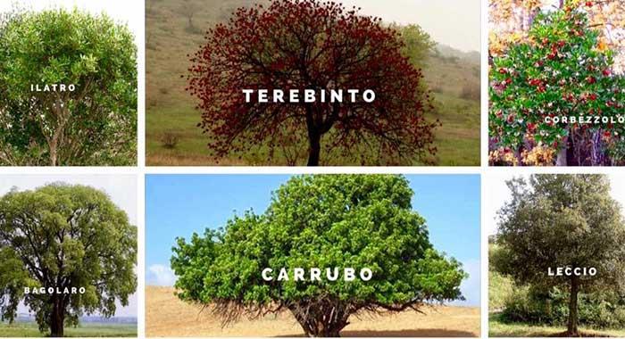 Ripristino vegetazione di Monte Pellegrino - 'Go Green' per donare un albero dall' 1 al 30 ottobre