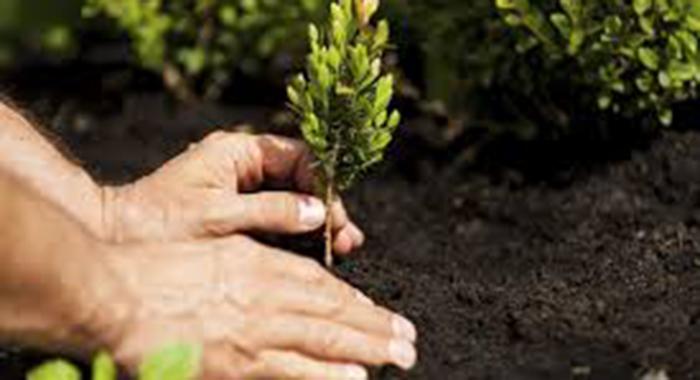 Ville e Giardini - Prosegue il piano di piantumazione di nuovi alberi