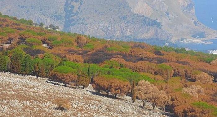 Ambiente. Stipulata convenzione per la gestione forestale di Monte Pellegrino