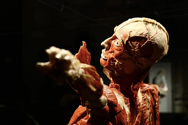 Immagine - Gunther Von Hagens' Body Worlds Palermo